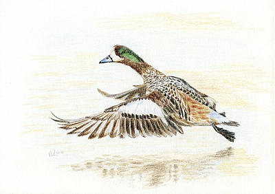 Painting - Duck Taking Off. by Raffaella Lunelli