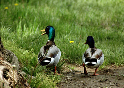 Mallard Photograph - Duck Talk At Frankenmuth Michigan by LeeAnn McLaneGoetz McLaneGoetzStudioLLCcom