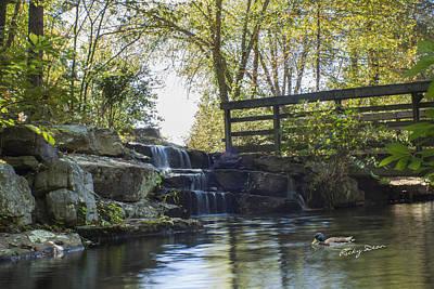 Photograph - Duck Under Bridge by Ricky Dean