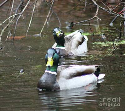 Photograph - Duck What? by Erick Schmidt