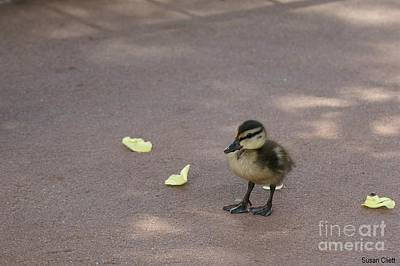 Photograph - Duckling by Susan Cliett