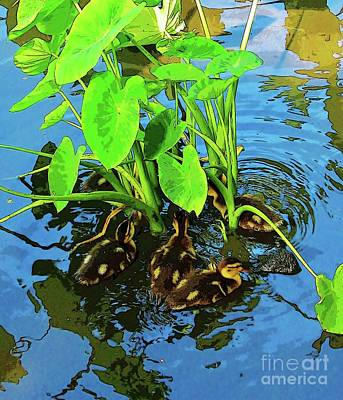 Photograph - Ducklings Under The Taro by Craig Wood