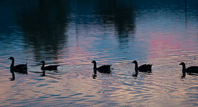 Thomas Kinkade - Ducks All In A Row by Douglas Barnett