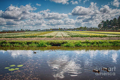 Photograph - Ducks And Flower-fields by Ana Mireles