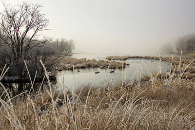 Photograph - Ducks And Morning Frost by Eleanor Caputo