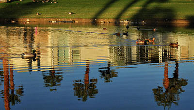 Photograph - Ducks And Palms by Diane Lent