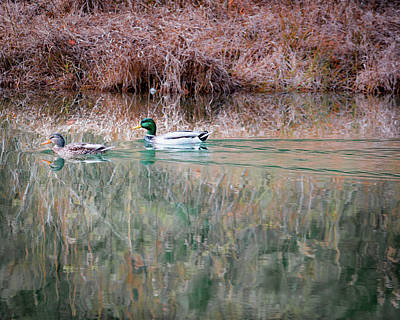 Photograph - Ducks by Ant Pruitt
