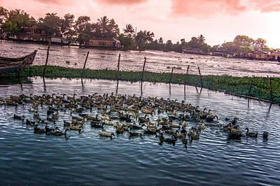 Ducks At Backwaters Around Alleppey, Kerala, India Art Print by Art Spectrum