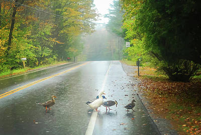 Photograph - Ducks Crossing In The Rain by Terry DeLuco