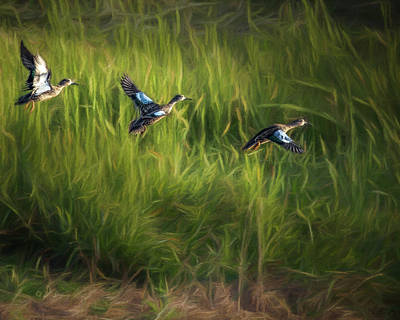 Photograph - Ducks Flight by Erwin Spinner