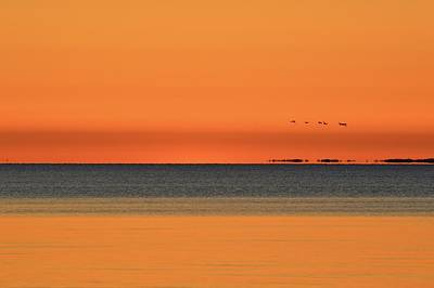 Photograph - Ducks Flying In The Morning  by Lyle Crump