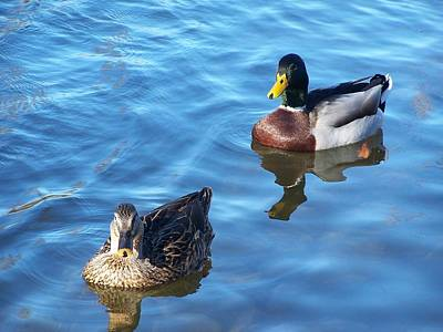 Photograph - Ducks In A River by Adam LeCroy