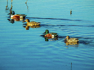 Digital Art - Ducks In A Row Digital Painting by Randy Herring