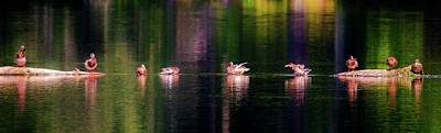 Photograph - Ducks In A Row by Sherman Perry