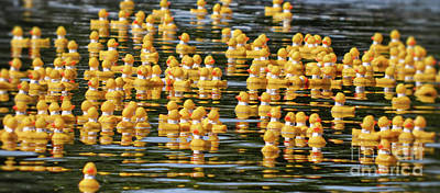 Photograph - Ducks In A Row by Traci Cottingham