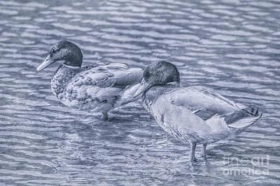 Game Bird Digital Art - Ducks In Blue by Randy Steele