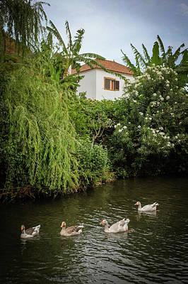 Photograph - Ducks In Creek by Carlos Caetano