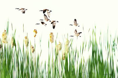 Photograph - Ducks In Flight - Migration  by Andrea Kollo