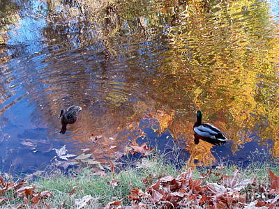 Photograph - Ducks In Oak Creek Autumn Reflections by Marlene Rose Besso