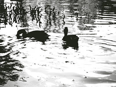 Ducks In Piedmont Park Art Print