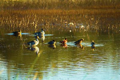 Digital Art - Ducks In The Afternoon Sun Digital Painting by Randy Herring