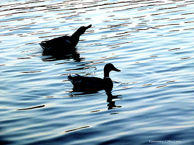 Photograph - Ducks In The Evening by Kimmary I MacLean