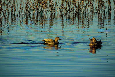 Photograph - Ducks In The Glow by Randy Herring
