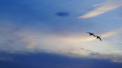 Photograph - Ducks On Blue Sky Delray Beach by Lawrence S Richardson Jr