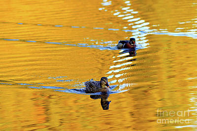Photograph - Ducks On Golden Pond by Terry Elniski