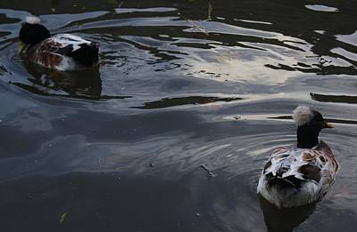 Photograph - Ducks On Moody Water by Julia Woodman