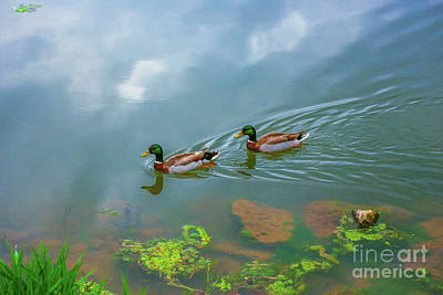 Photograph - Ducks On Morning Swim by Randy Steele