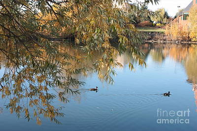 Photograph - Ducks On Peaceful Autumn Pond by Carol Groenen
