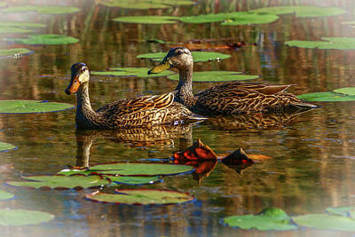 Photograph - Ducks On Pond by Tom Claud