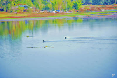 Photograph - Ducks On Spring Lake by Gina O'Brien