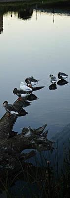 Ducks On The Napa River Original by Jerry Kalman