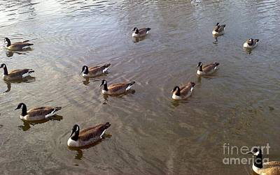 Photograph - Ducks On The Occoquan River by Jimmy Clark