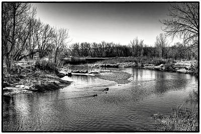 Ducks On The South Platte River Art Print