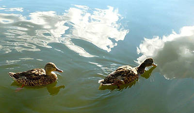 Photograph - Ducks Sipping The Sky by 'REA' Gallery
