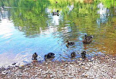 Photograph - Ducks World by Jasna Dragun