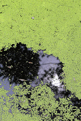 Photograph - Duckweed And Sun Reflection 2018 by Mary Bedy
