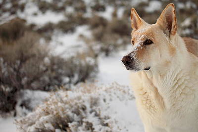 Photograph - Dude Dog  by SB Sullivan