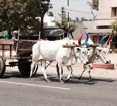 Photograph - Duel Bull by LeLa Becker