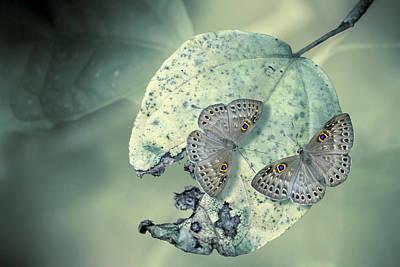 Butterfly Photograph - Duet by Jimmy Hoffman