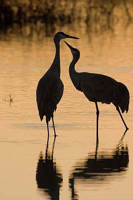 Photograph - Duet Of Cranes by Mark Miller