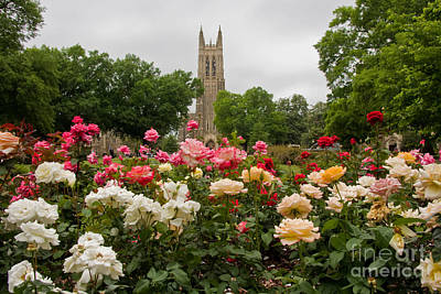 Photograph - Duke Chapel With Rose Garden by Jill Lang