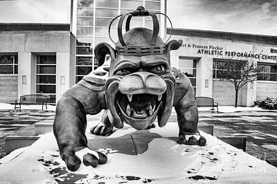 James Madison University Photograph - Duke Dog by Cara Walton