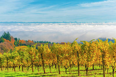 Photograph - Dundee Hills Vineyards by Dee Browning