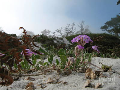 Photograph - Dune Bloom by James B Toy