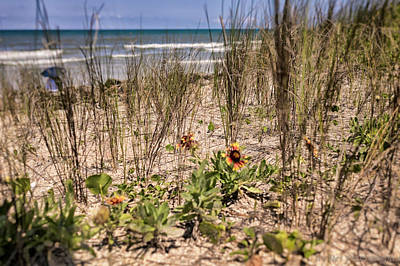 Photograph - Dune Flowers by JoeDes Photography