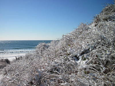 Photograph - Dune Grass And Snow by Betty Buller Whitehead